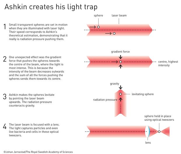 askin-light-trap