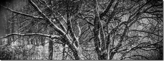 bright-snow-dark-tree